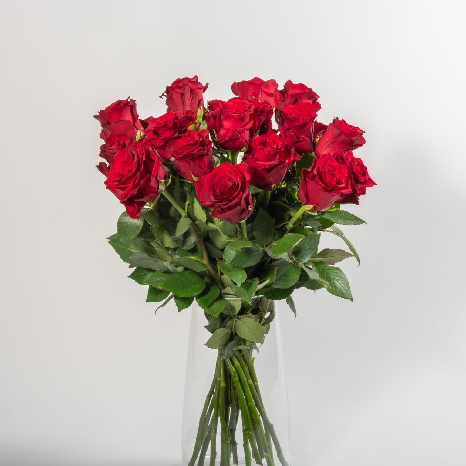 Rote Rosen Videos Kostenlos